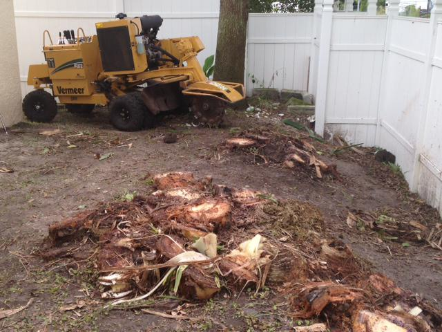 removing stump